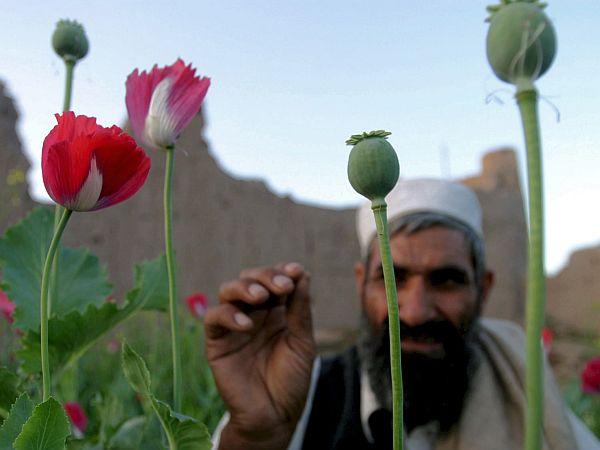 Afganistanski kmetje pridelujejo največ opija na svetu. Foto: EPA