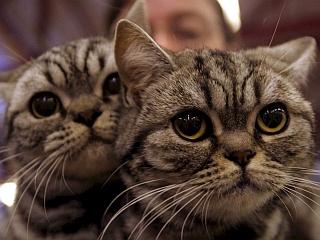 Mački