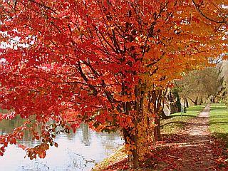 Čudovite barve jeseni Foto: