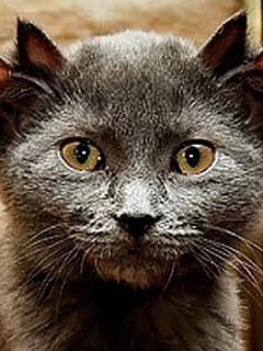 Mačke se z jezikom umivajo, ko pa takšno obnašanje postane pretirano, je potrebna pomoč strokovnjaka. Foto: EPA