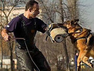 Policija je v skladu s svojimi pristojnostmi v letu 2006 obravnavala 1.136 kršitev zakona o zaščiti živali, skoraj enako število v letu 2007 (1.139 kršitev), lani pa nekoliko manj, in sicer 1.045 kršitev. Foto: EPA