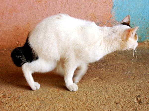 Policisti so o ugotovitvah in poginih mačk obvestili Občino Sežana, Zdravstveni inšpektorat RS in Veterinarsko upravo RS. Foto: EPA
