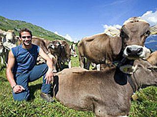 Mister Švice in krave vabijo. Foto: Reuters